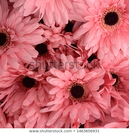 Coloré fleurs fleur rouge jaune pour la vente Photo stock © IS2