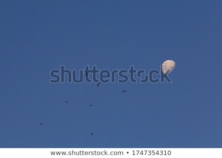 waxing gibbous moon with copy space landscape stock photo © suerob