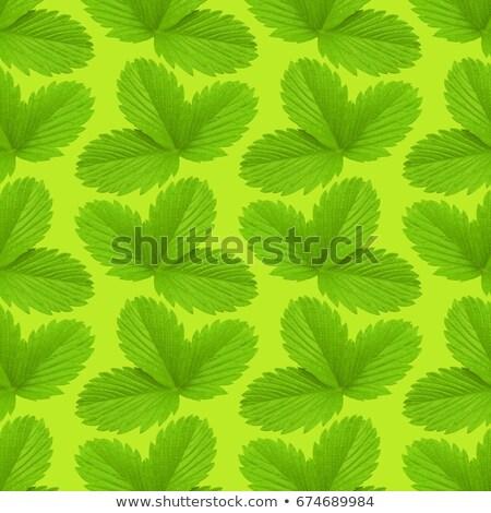 Truskawki liści tekstury wzór roślin wiosną Zdjęcia stock © popaukropa