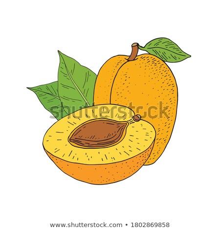 Twee oranje afbeelding fruit Stockfoto © robuart