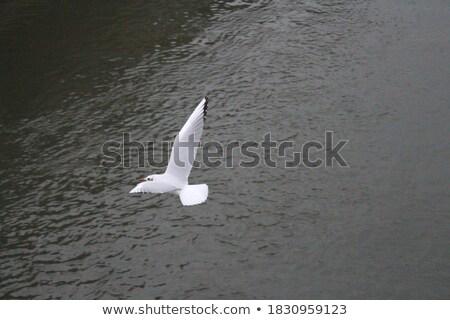 Gaviotas río París Francia ciudad naturaleza Foto stock © Givaga