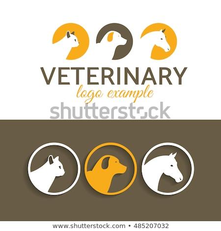 Elegante caballo cabeza círculo logo perfil Foto stock © krustovin