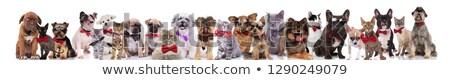 Equipe muitos cavalheiros gatos cães branco Foto stock © feedough