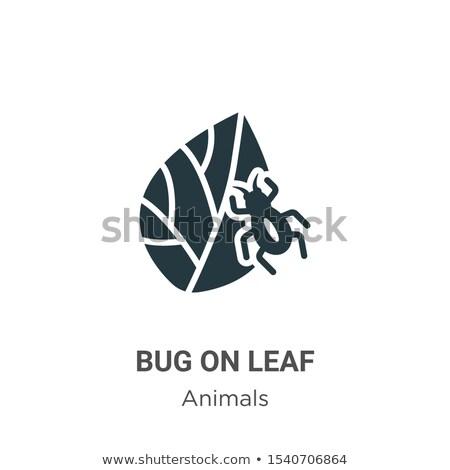 Logo-ontwerp bugs planten illustratie natuur blad Stockfoto © colematt