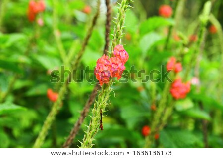 A red Forest Landscape with Volcano and jungle plants stock photo © Natali_Brill