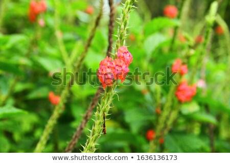 Piros erdő tájkép vulkán dzsungel növények Stock fotó © Natali_Brill