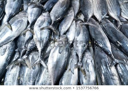 Frescos atún peces mariscos calle mercado Foto stock © dolgachov