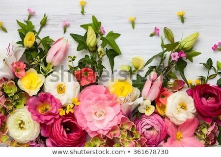peony flowers on wood stock photo © agfoto
