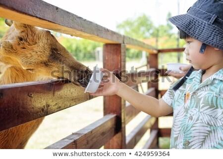 Weinig jongen herten boerderij Stockfoto © galitskaya