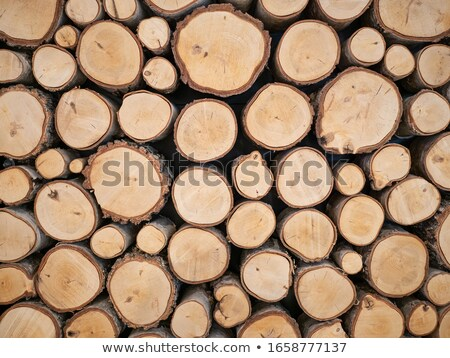 closeup of logs of trees in nature pile of wood logs ready for winter in the forest firewood as a stock photo © galitskaya