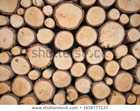 Közelkép fák természet köteg fa kész Stock fotó © galitskaya
