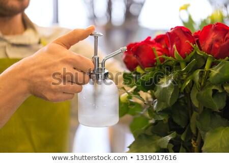 florist or seller moistening roses at flower shop Stock photo © dolgachov