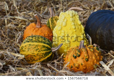 Unusual warted ornamental gourd with orange and green skin Stock photo © sarahdoow