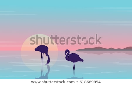 Flamingo silhouette at sunset landscape on lake scene. Vector Stock photo © Andrei_
