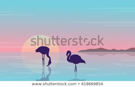 Flamingó sziluett naplemente tájkép tó jelenet Stock fotó © Andrei_