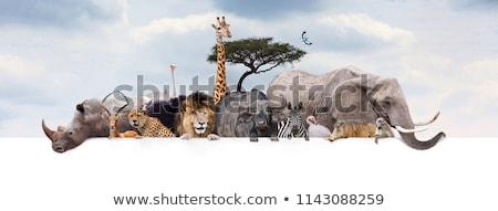 Struzzo zoo banner illustrazione design frame Foto d'archivio © bluering