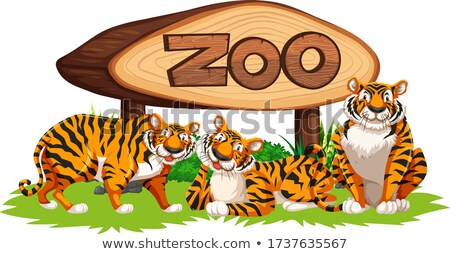 Tigre zoo chat design cadre art Photo stock © bluering