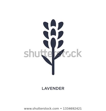 Lavanda vector de la flor icono ilustración plantilla de diseño flor Foto stock © Ggs