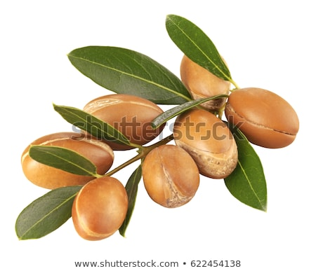 Branch with Brown Nuts Isolated, Argania Tree Stock photo © robuart