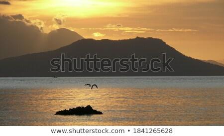 Bird Rocks Stock photo © craig