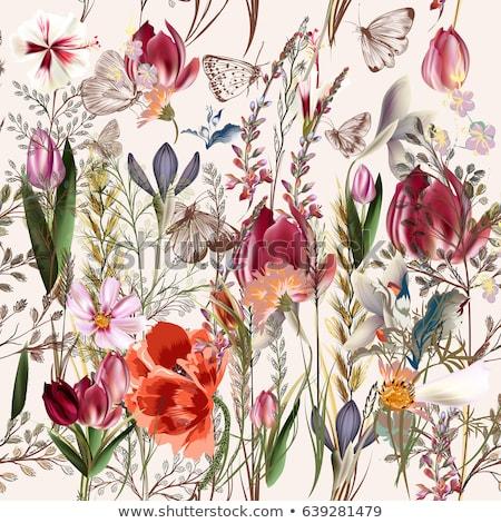 rose flower pattern floral card border on white Stock photo © sherjaca