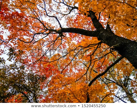 autumnal tree branch stock photo © annaomelchenko