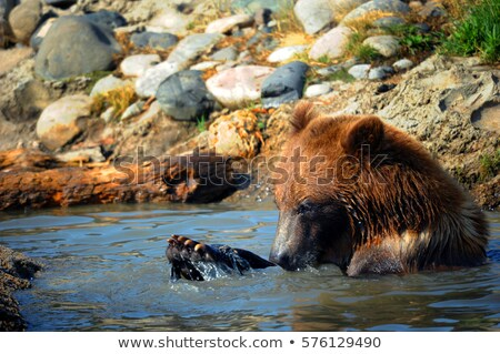 Playful Submerged Bear Stock photo © Alvinge