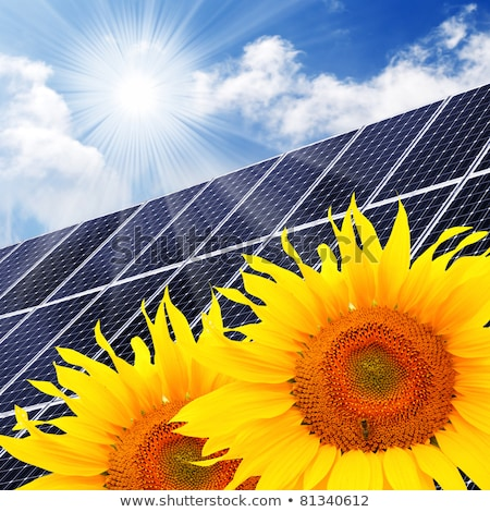Solar panels and Sunflower against a sunny sky Stock photo © visdia