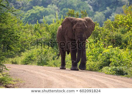elefante · strada · piedi - foto d'archivio © timwege