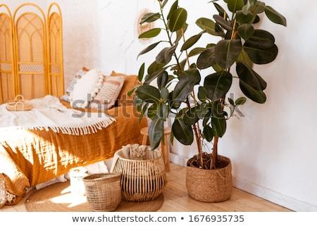 quarto · verde · paredes · branco · cama · casa - foto stock © iriana88w