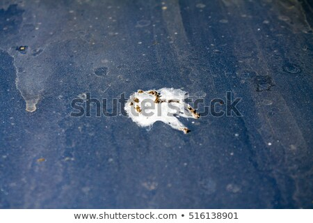Bird droppings on car hood Stock photo © elenaphoto