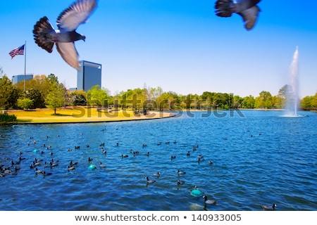 Houston tó tavasz víz galambfélék zöld fű Stock fotó © lunamarina