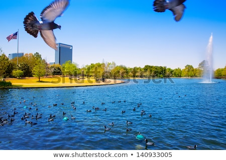 Houston göl bahar su yeşil ot Stok fotoğraf © lunamarina