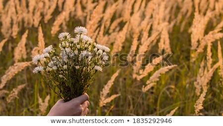 Joven ramo flores naturaleza nina cara Foto stock © koca777