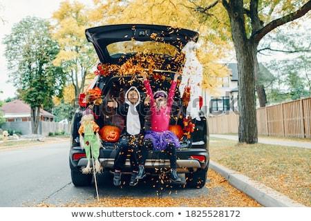 trunk Stock photo © pedrosala