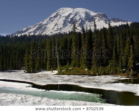 Ghiacciato riflessione lago parco ghiacciato cielo Foto d'archivio © billperry