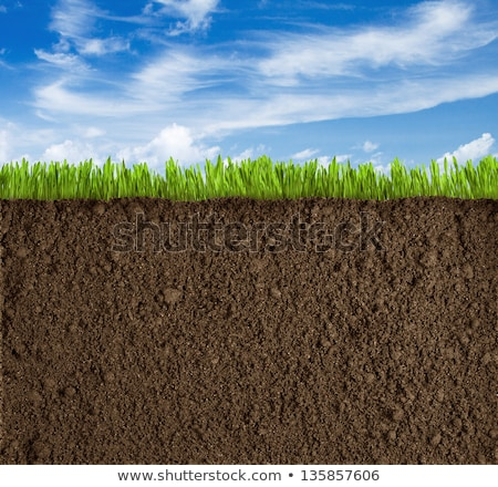 cut of soil Stock photo © Sarkao