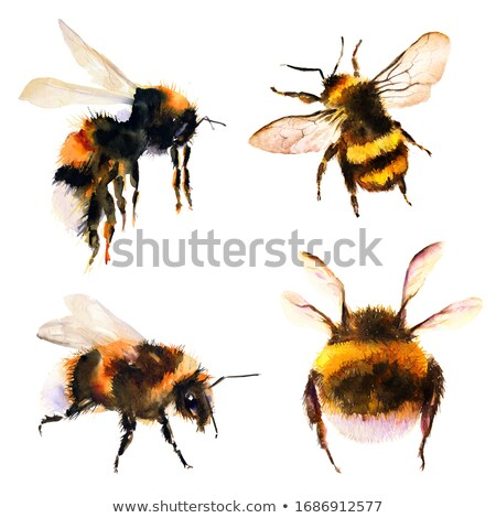 Voar mel de abelha pequeno preto Foto stock © ziprashantzi