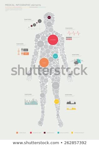ストックフォト: Human Body Anatomy Infographic Flat Design On Blue Background