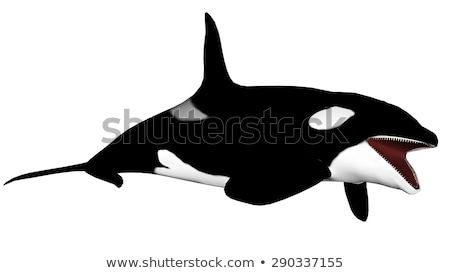 assassino · baleia · 3d · render · isolado · branco · peixe - foto stock © elenarts