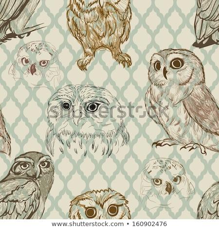 Bastante coruja linha desenho olho natureza Foto stock © shawlinmohd