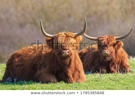скота одиночество дерево трава Сток-фото © olandsfokus