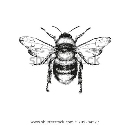 Bee · Cartoon · мало · лице · красный · смешные - Сток-фото © Nekiy