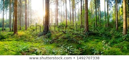 Landschap rotsen gedekt mos bos voorjaar Stockfoto © Kotenko