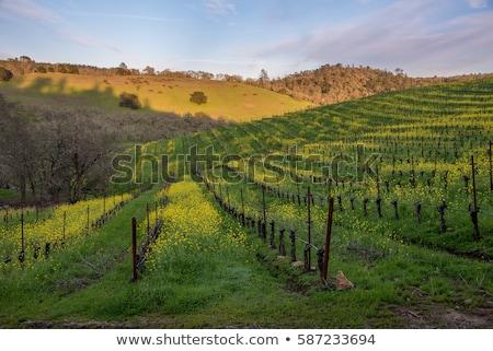 Kwiaty rozwój California pola pełny Zdjęcia stock © emattil