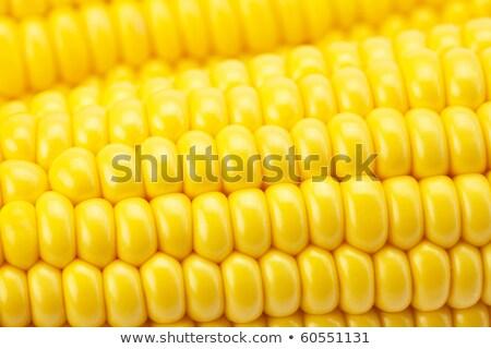 ripe corn cob close up stock photo © rrvachov