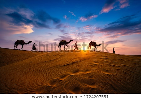 puesta · de · sol · sáhara · desierto · camellos · palmas · sol - foto stock © get4net