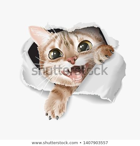 смешные котенка иллюстрация акварель эскиз кошки Сток-фото © ConceptCafe