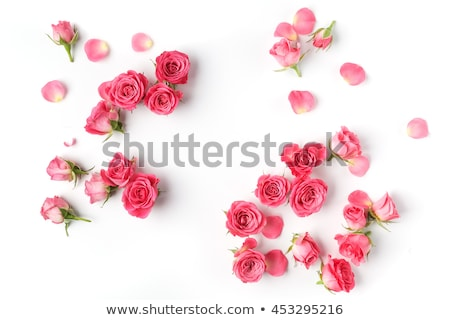 fresh pink roses frame border isolated stock photo © artjazz