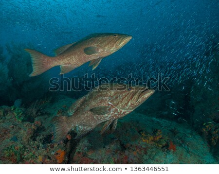 grup · küçük · mercan · balık · hareket · hareket - stok fotoğraf © bank215